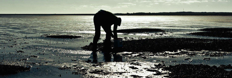 Wadlopen en oesters rapen op Terschelling - foto Paul Cupido